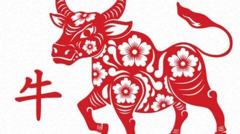 ¿Qué significa el Búfalo de metal?